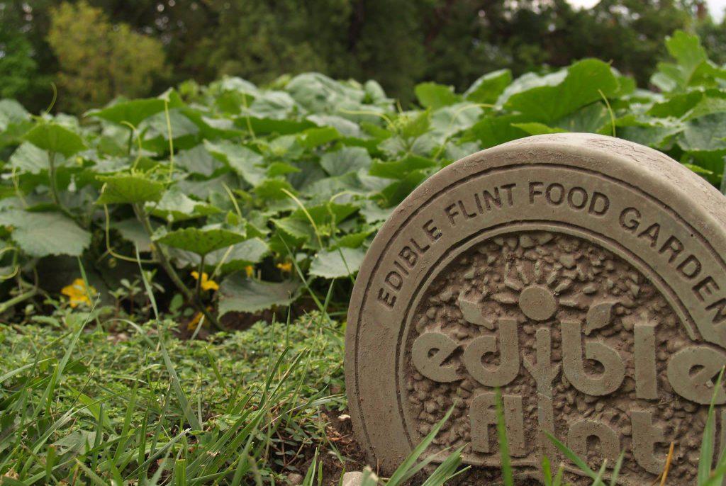 Edible Flint garden.