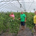 two women and a man standing in tomato greenhouse